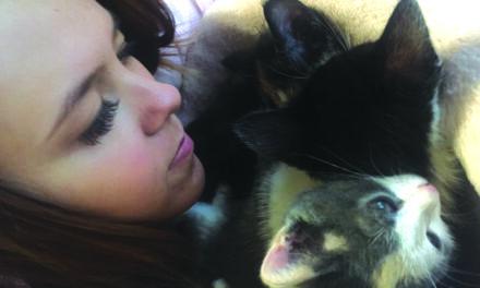 Shelter finds support in foster volunteer program