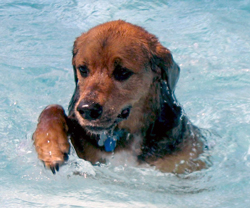 Annual Dog Splash is Aug. 18