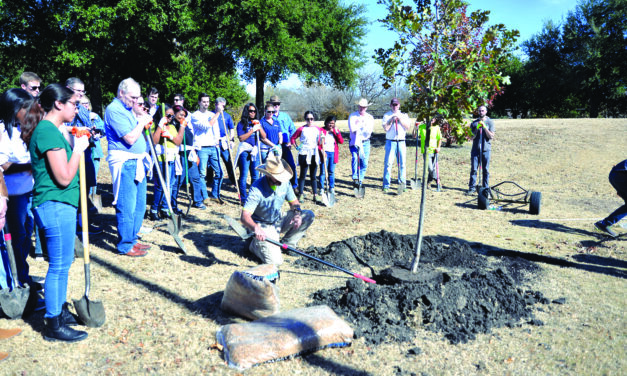 City offers tree planting assistance, advice