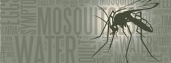 """The """"Fourth D"""" of Mosquito Prevention: Drain"""