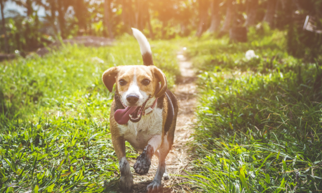 Reminder: Picking Up Pet Waste Helps Waterways