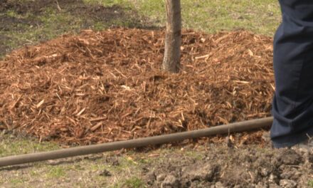 City Mulches Grass Clippings; Encourages Residents to do Same