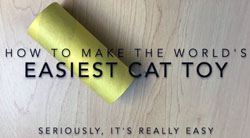 Book, Video Show How to Make Cat Toys